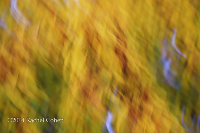 """Swirling Autumn"""
