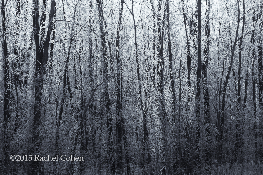 """Winter Forest"""