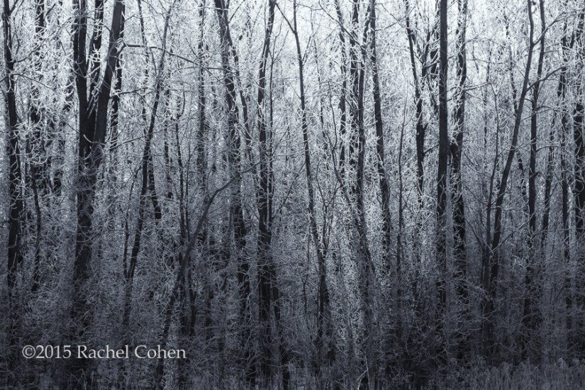 """Frosty Forest"""
