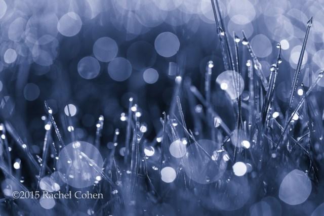 """Morning Magic in Blue"""