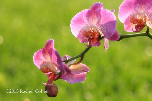 """""""Sun Drenched Orchids"""" Wonderful morning sunlight illuminates these lovely purple orchids!"""