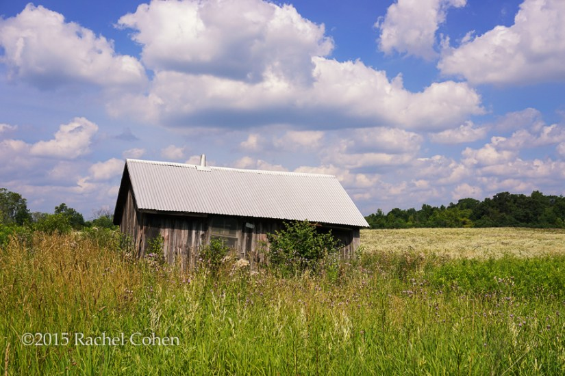 """Barn Among the Wildflowers"" A small and gently declining old barn nestled among wild grasses with fields of various wildflowers blooming in the background!"