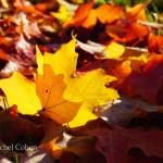 """""""Delicious Autumn"""""""