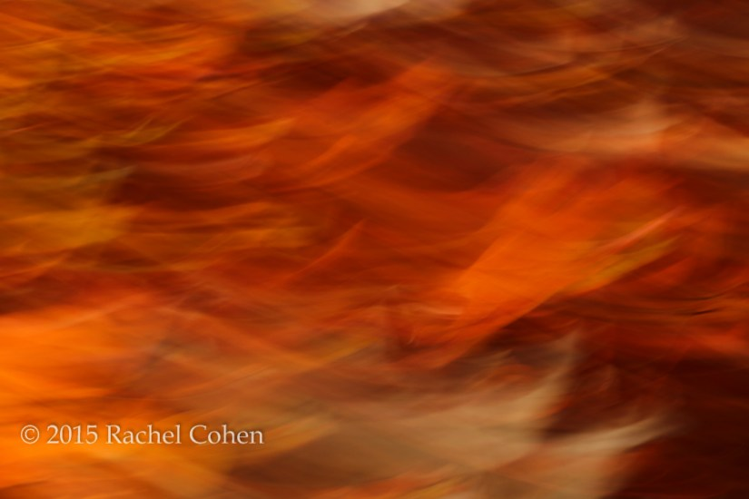 """Sweet Potato Mash"" I had a year with a lot of motion blur abstracts, and this is one of my favorites!"