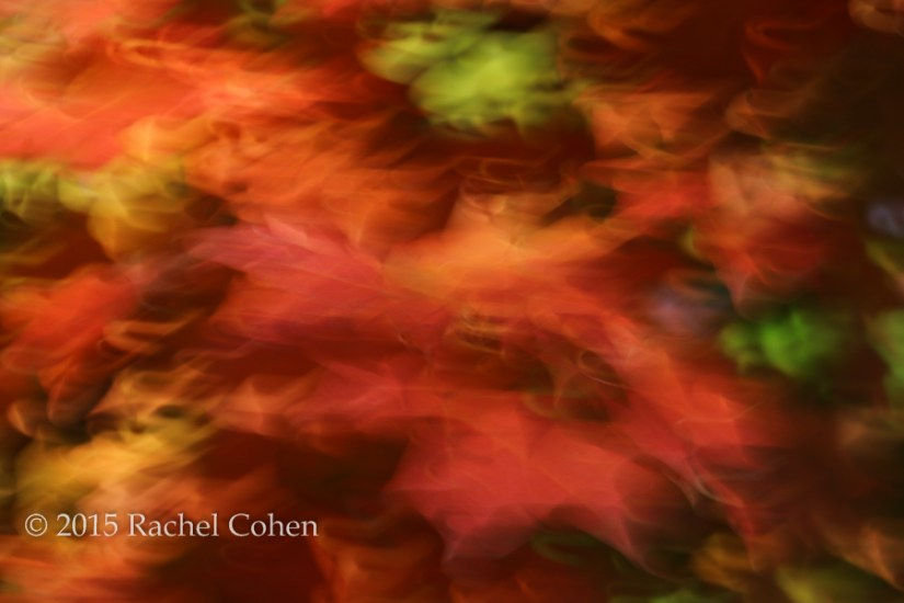 """Holiday Dancing"" These colors can give the feel of the holiday season or autumn."