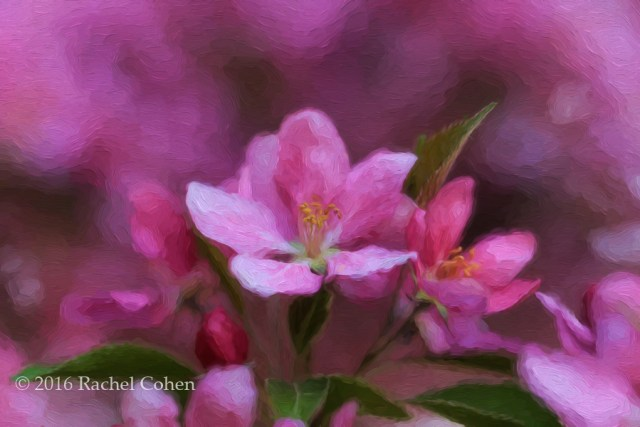 """Pink Floral Oil Painting"" The same image as above, but processed as a digital oil painting."