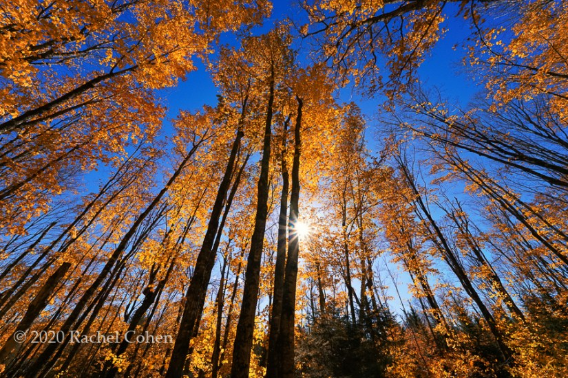 """Sparkling Through Autumn Trees""  A gorgeous fall day with amazing color, blue skies, and a sunburst!"