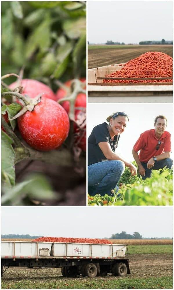 Collage of 4 photos taken at Red Gold farm:: close up of tomatoes on vine, large pile of tomatoes in field, 2 farm workers, and a truck trailer filled with tomatoes.
