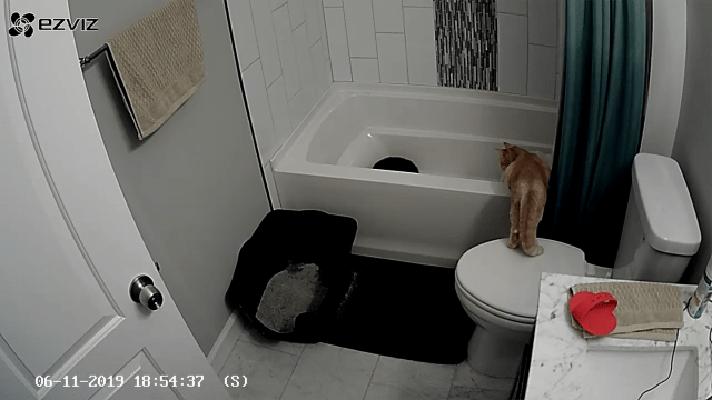 Sandy standing with back legs on the toilet lid and front legs on the edge of the tub to see Bumbledore better.