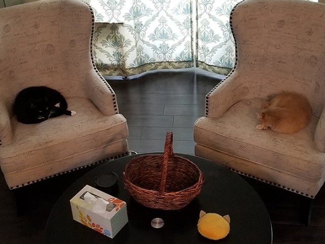 Sandy and Bumbledore sitting on adjacent chairs.