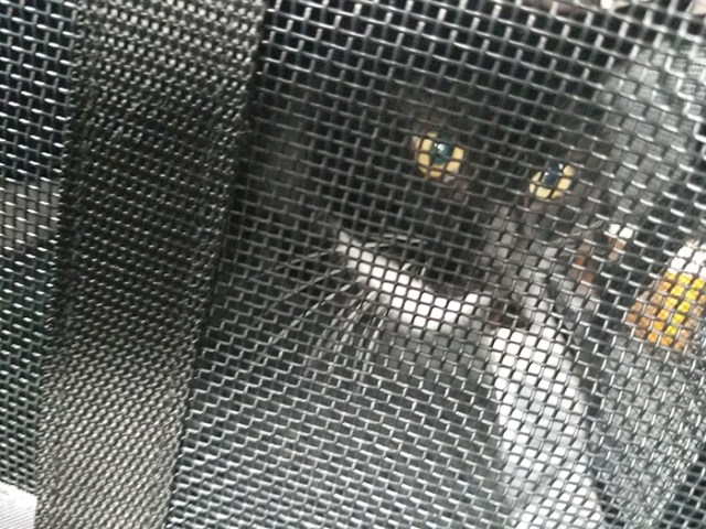 Bumbledore in his carrier, ready for his ride home.