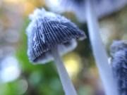 fungi.racheldragonfly-11