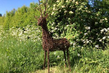 Willow Deer 2
