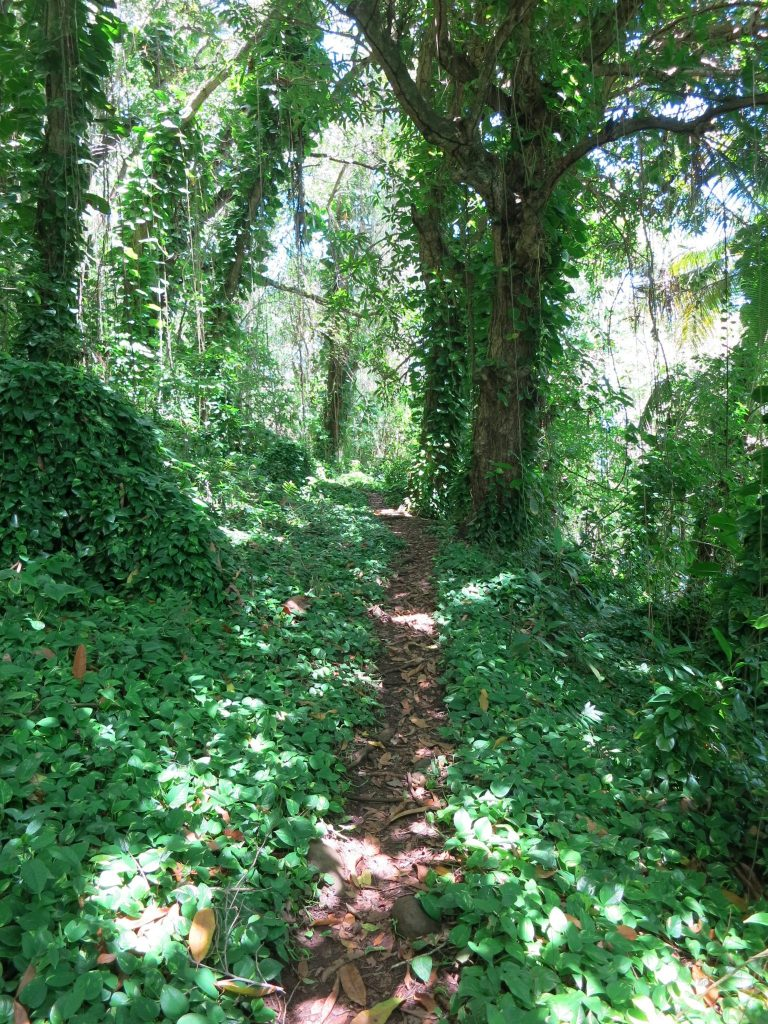 view of the path along the coast in Trois-Rivieres, Guadeloupe