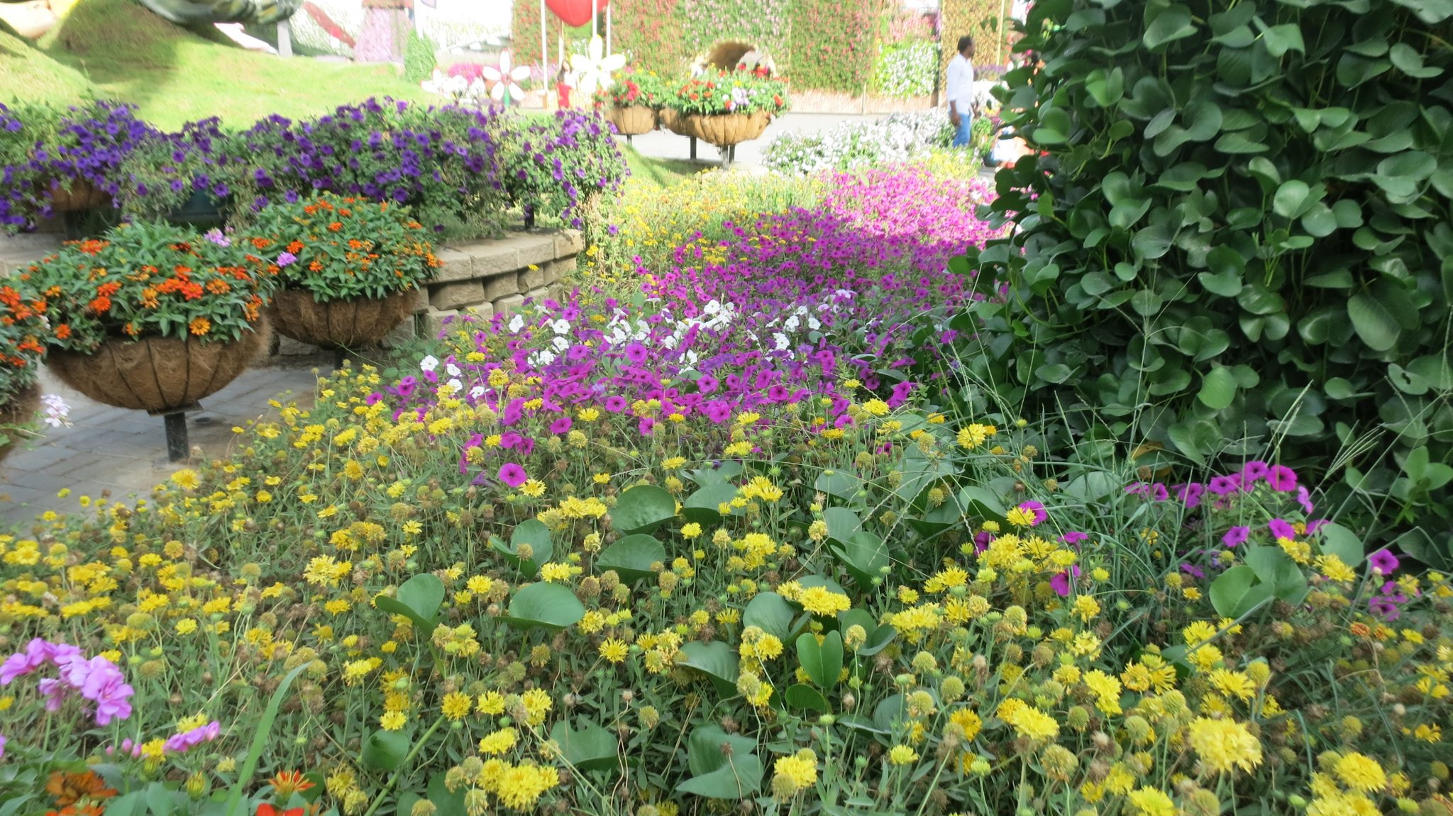 Flowers everywhere we looked in Dubai Miracle Garden.