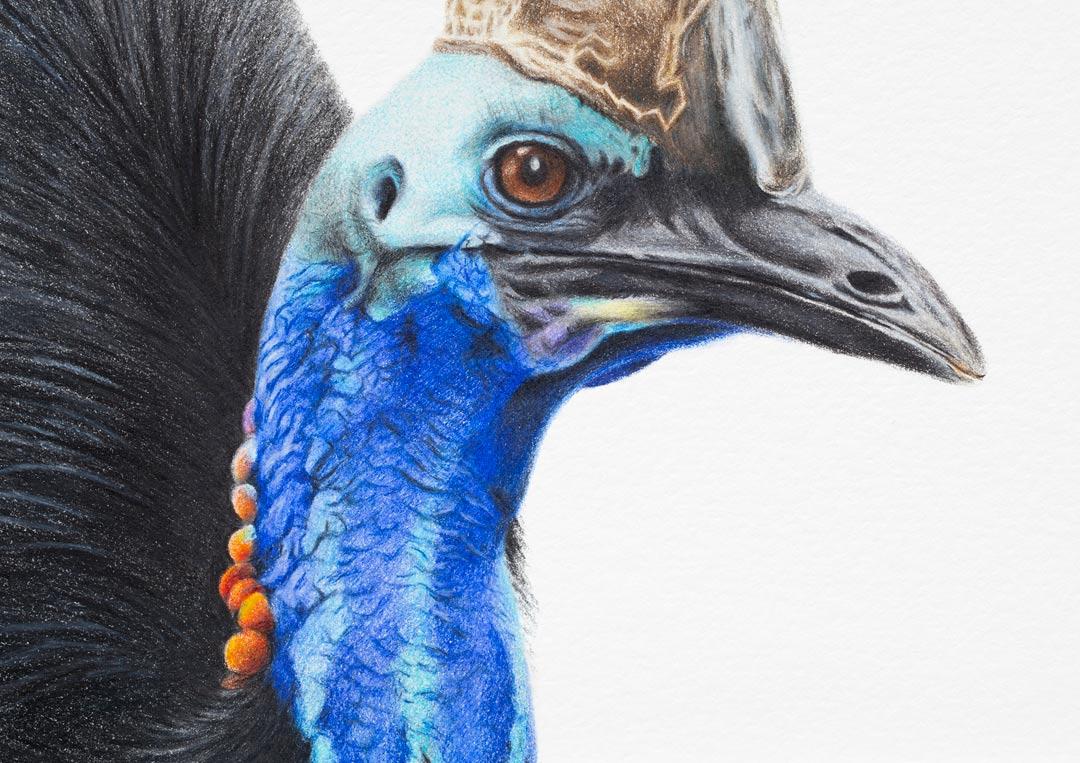 Southern Cassowary – Fine Art Print