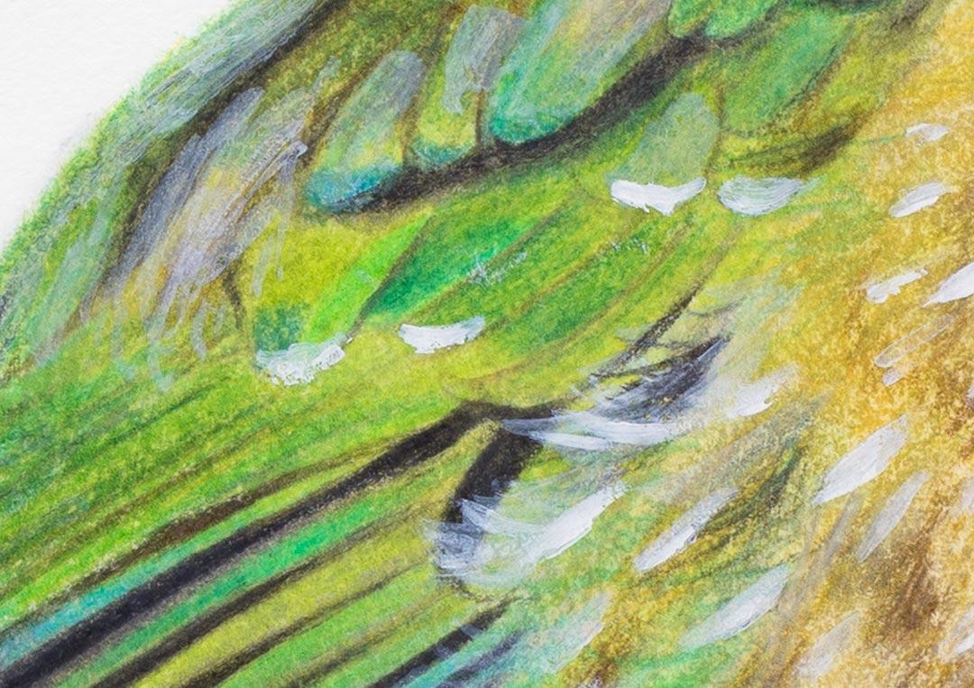Green Catbird – Fine Art Print