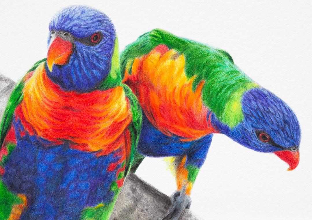 Rainbow Lorikeets – Fine Art Print