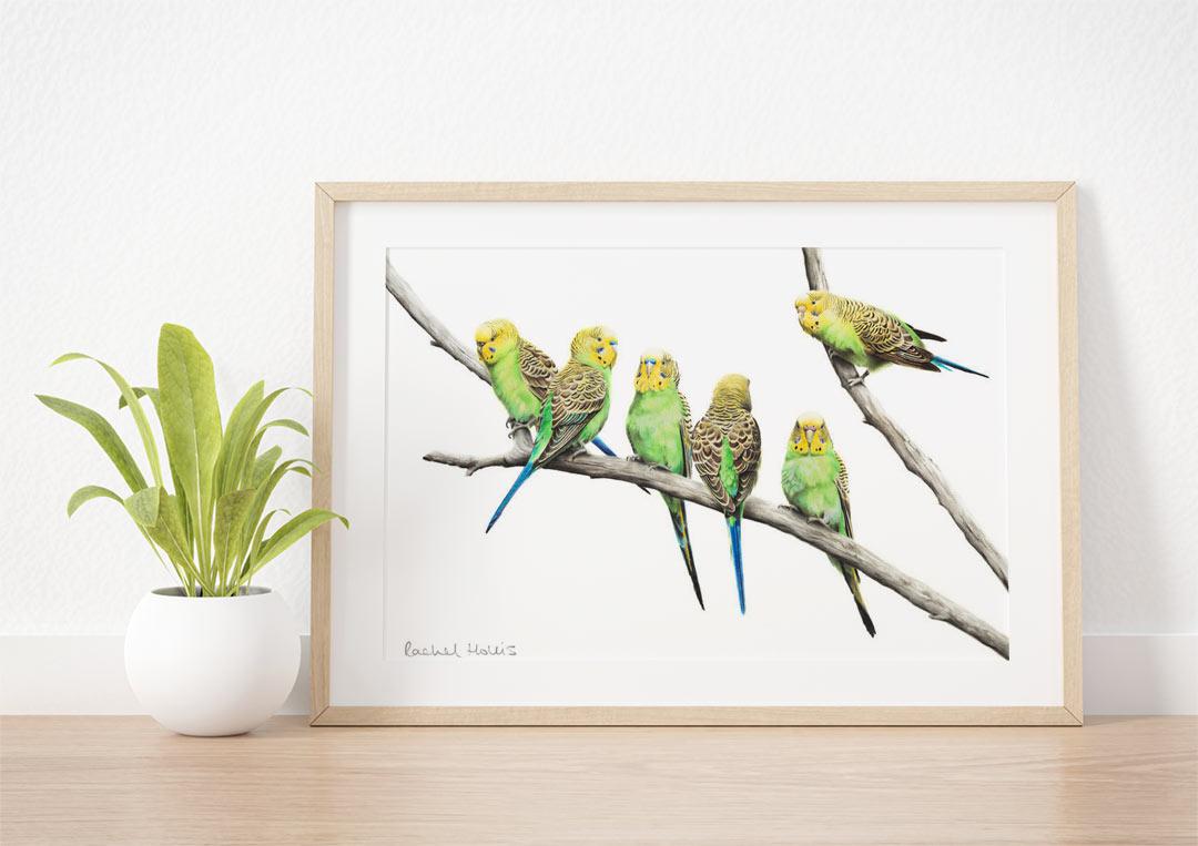 Budgerigars – Example of Framed Fine Art Print