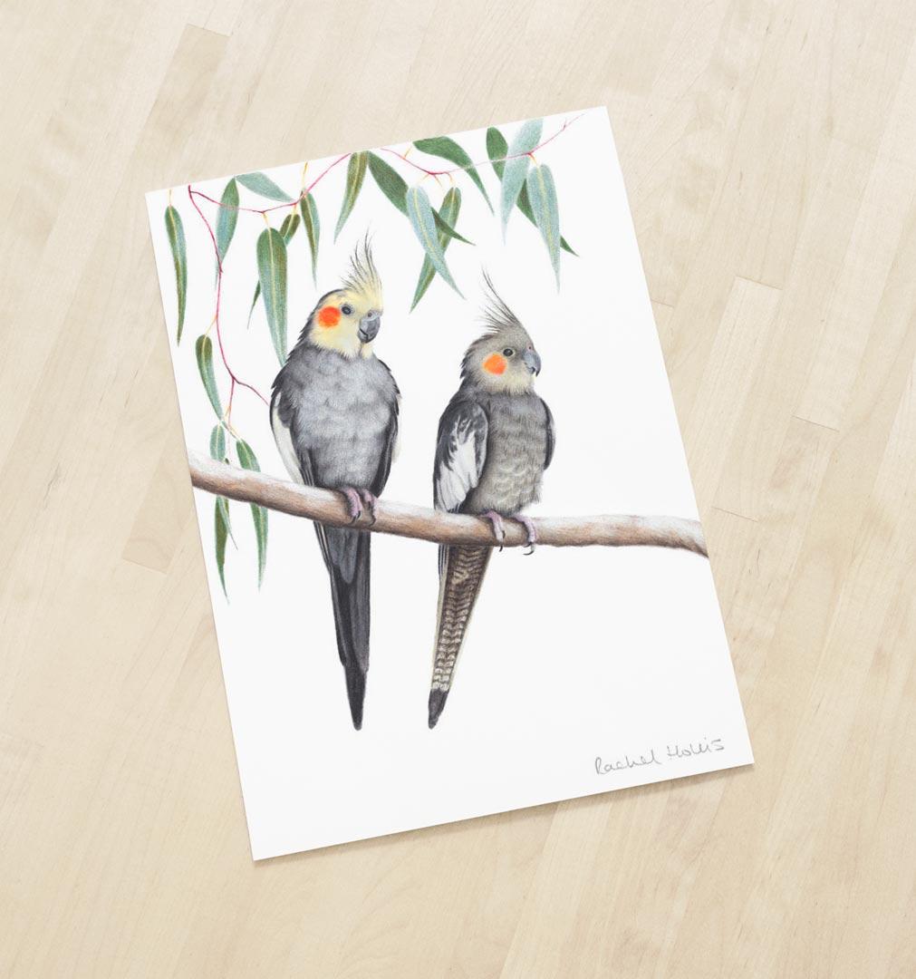 Cockatiels – Fine Art Print