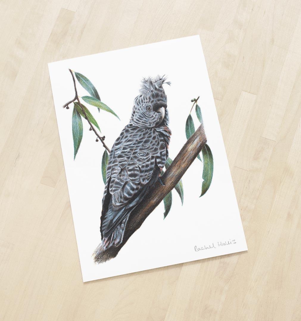 Gang-gang Cockatoo – Fine Art Print