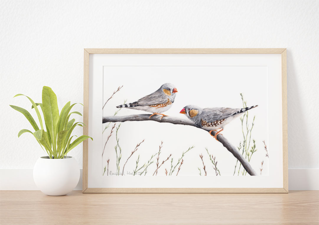 Zebra Finches – Example of Framed Fine Art Print