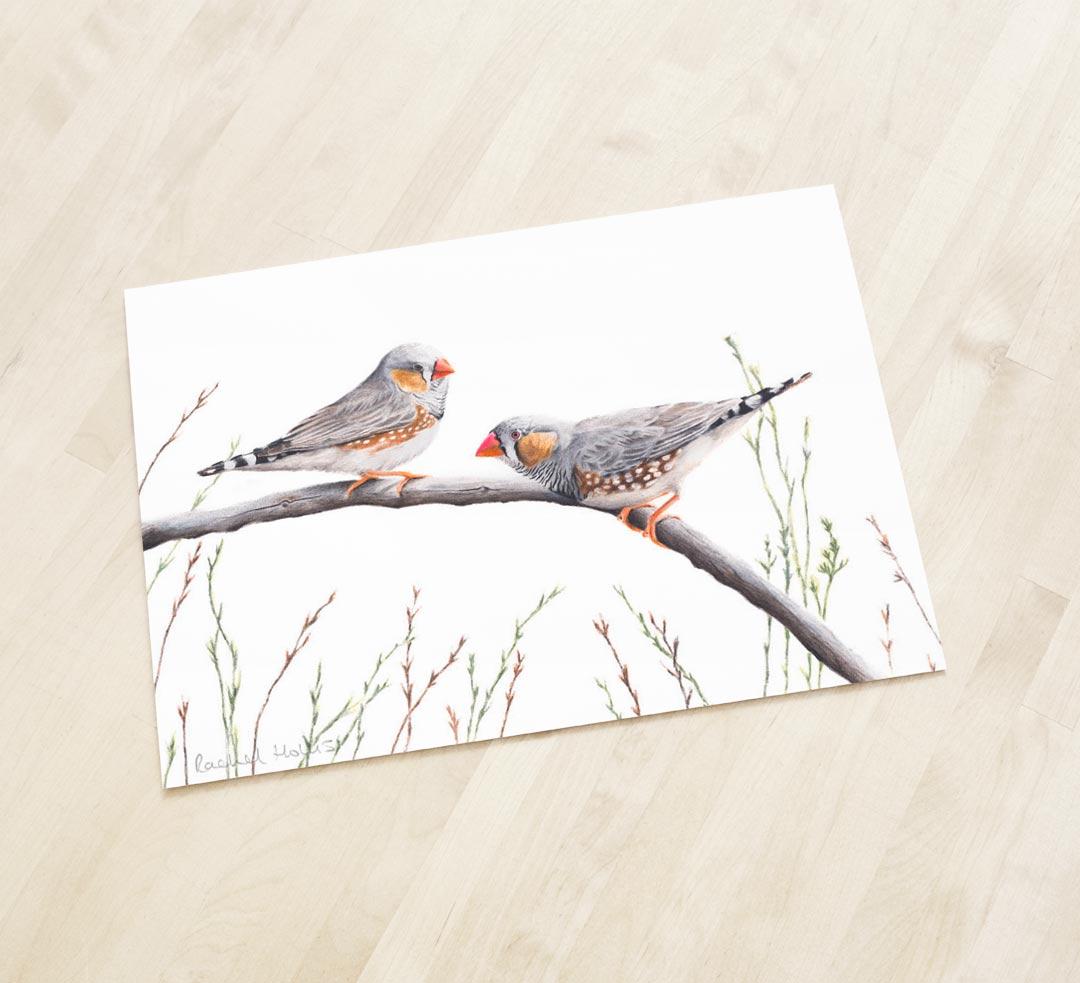Zebra Finches – Fine Art Print