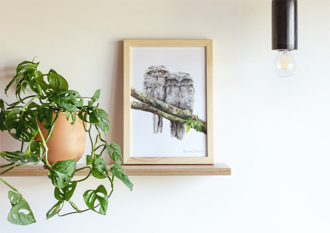 Tawny Frogmouths - Example of Framed Fine Art Print