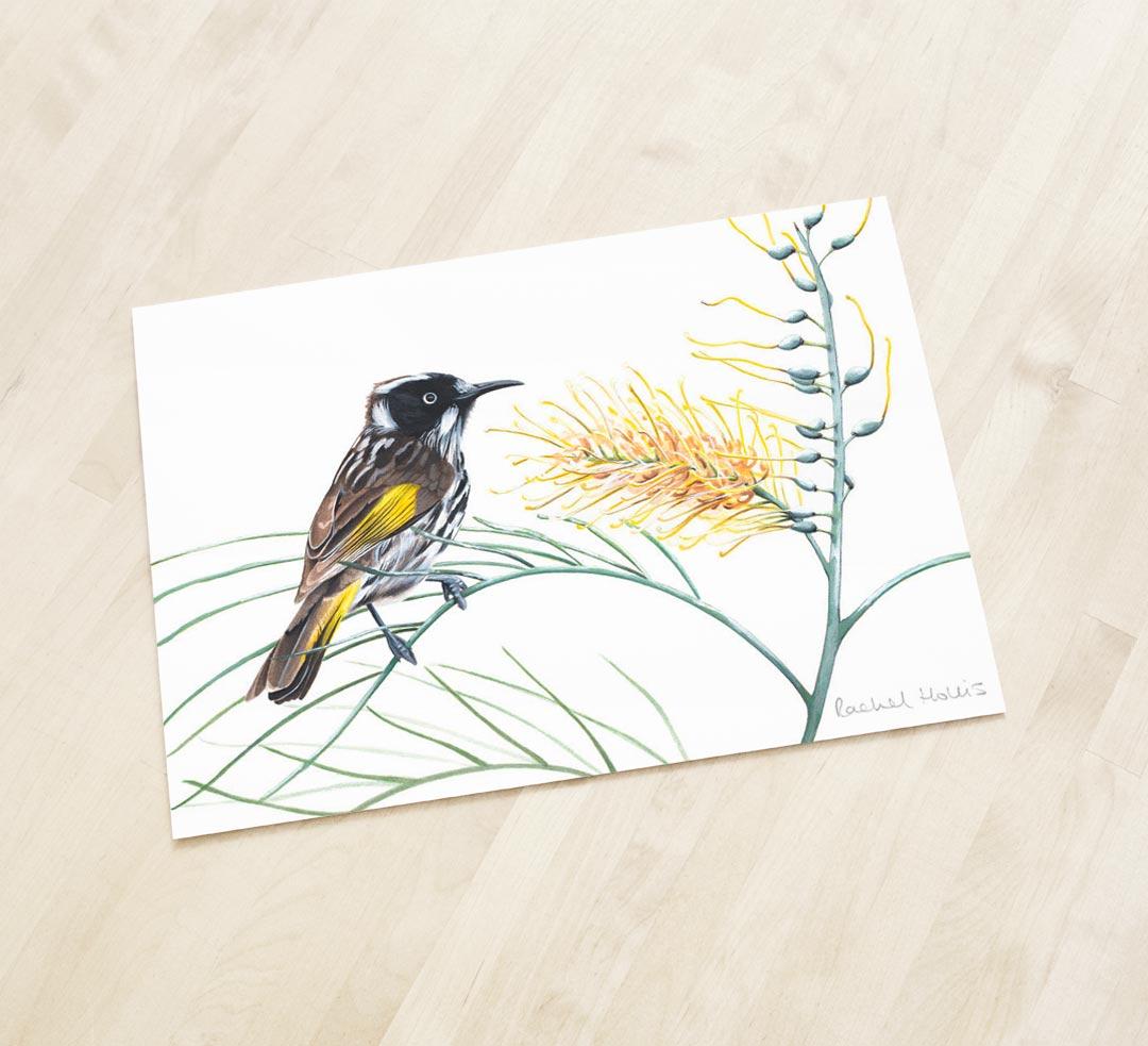 New Holland Honeyeater - Fine Art Print