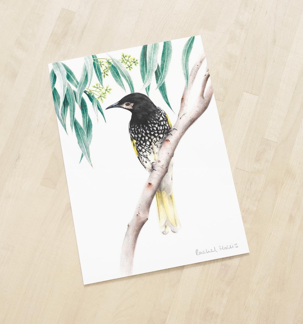 Regent Honeyeater – Fine Art Print