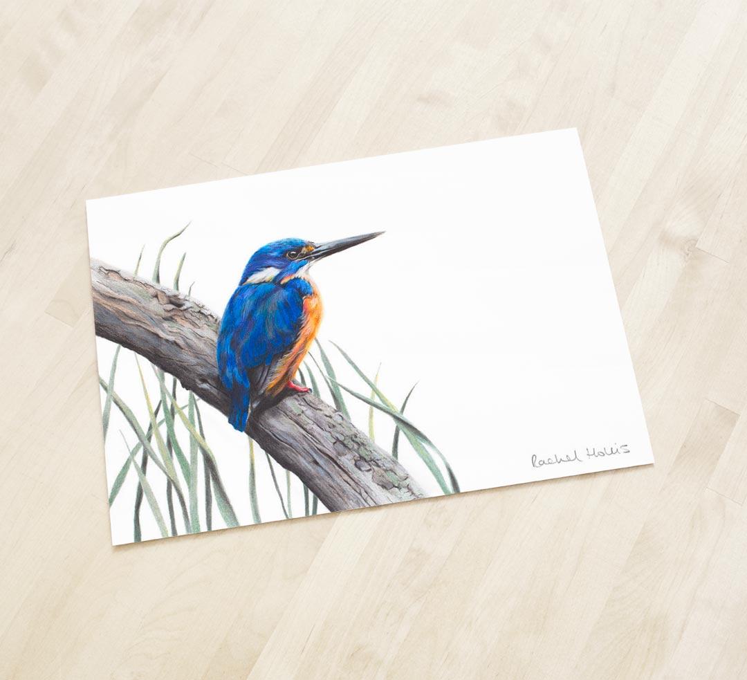 Azure Kingfisher – Fine Art Print