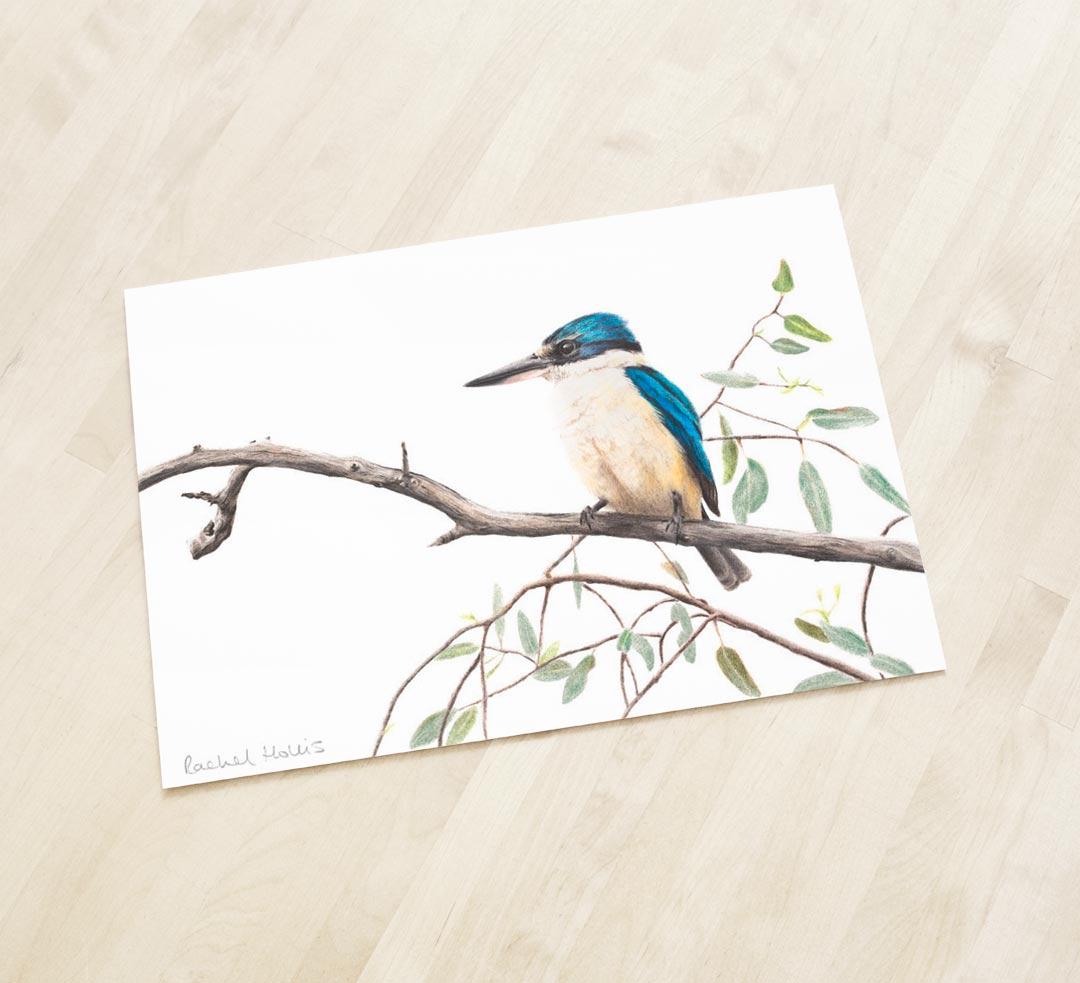 Sacred Kingfisher – Fine Art Print