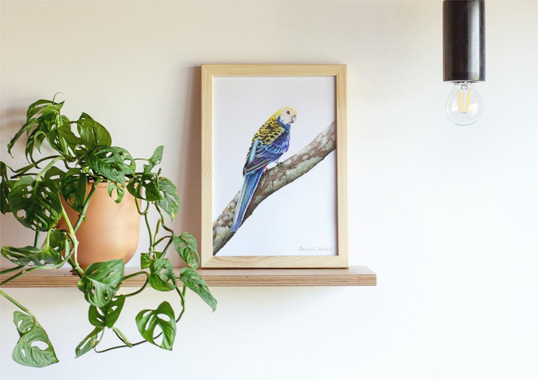 Pale-headed Rosella – Example of Framed Fine Art Print