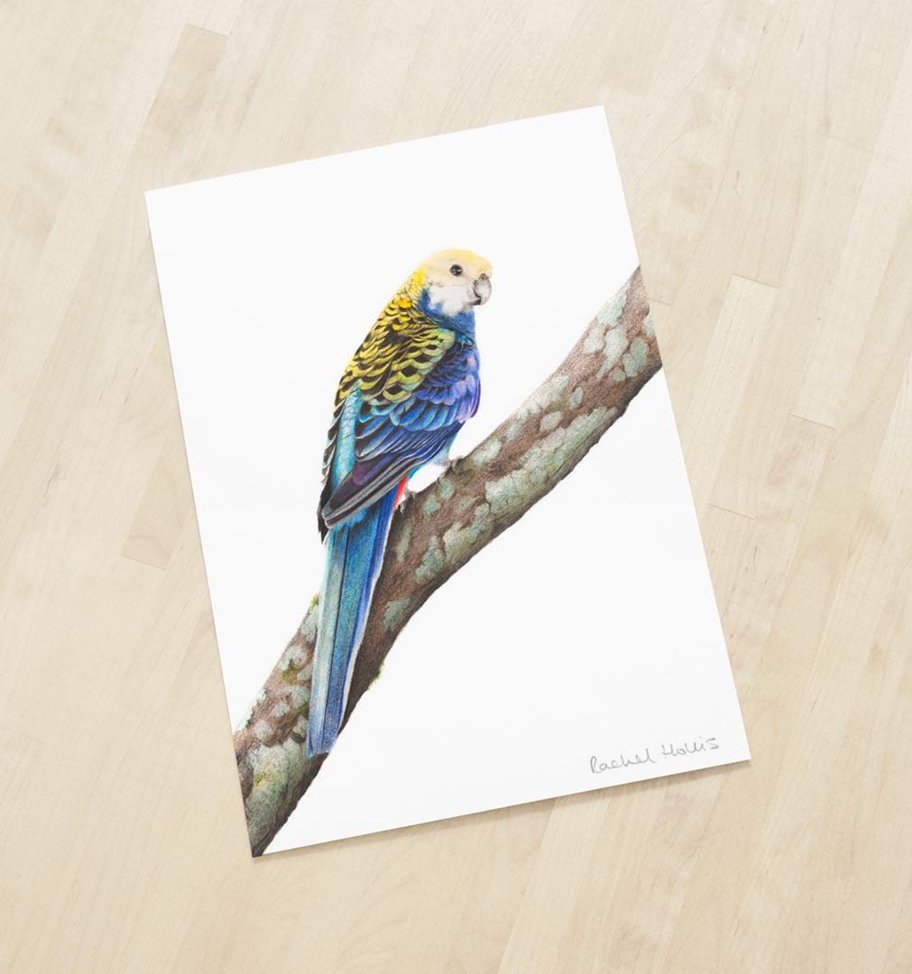 Pale-headed Rosella – Fine Art Print