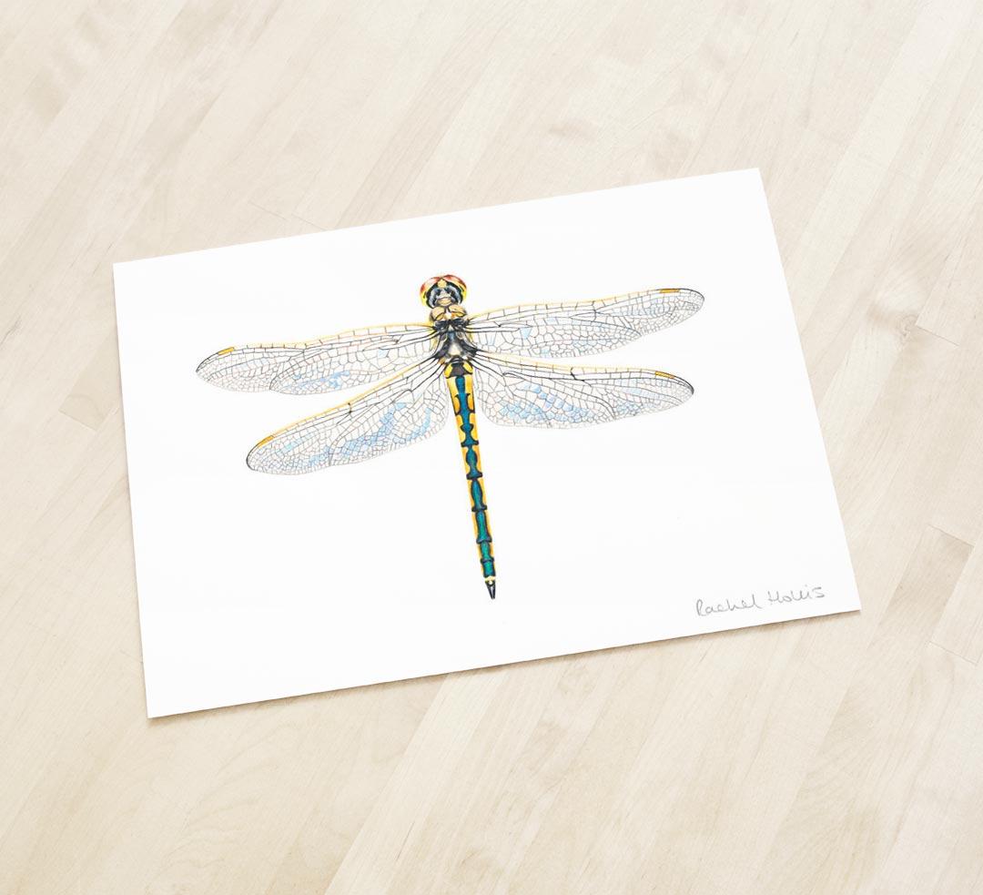 Australian Emerald Dragonfly – Fine Art Print