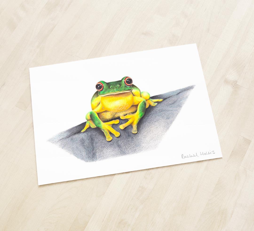 Red-eyed Tree Frog – Fine Art Print