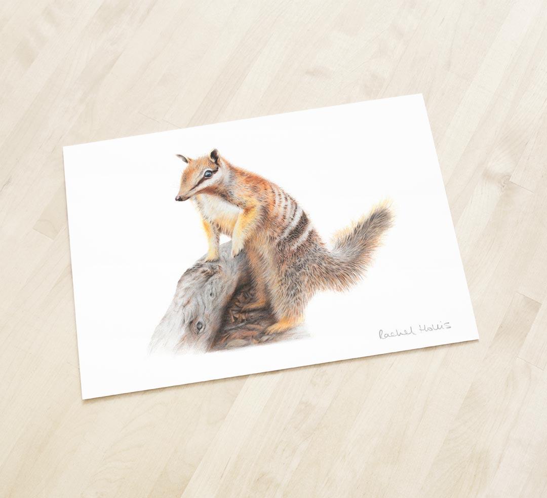 Numbat – Fine Art Print