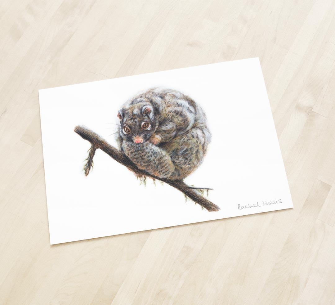Green Ringtail Possum – Fine Art Print