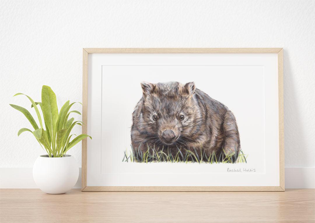 Wombat – Example of Framed Fine Art Print