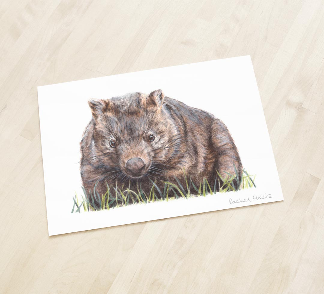 Wombat – Fine Art Print