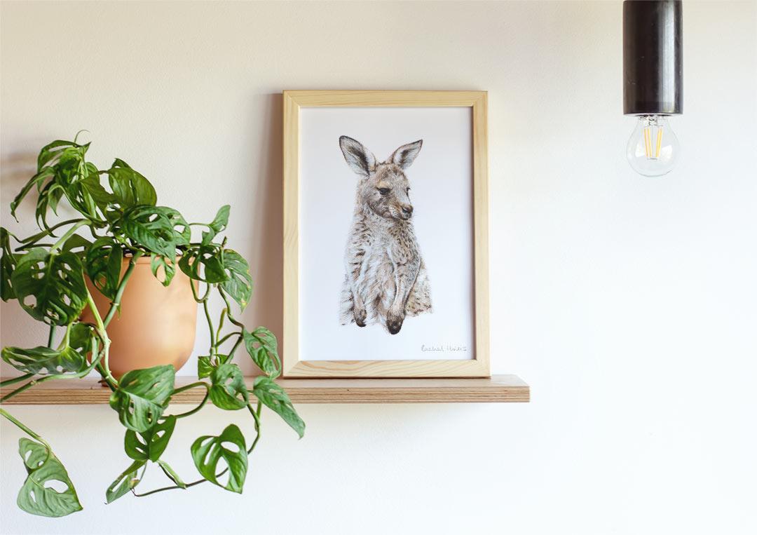 Eastern Grey Kangaroo – Example of Framed Fine Art Print