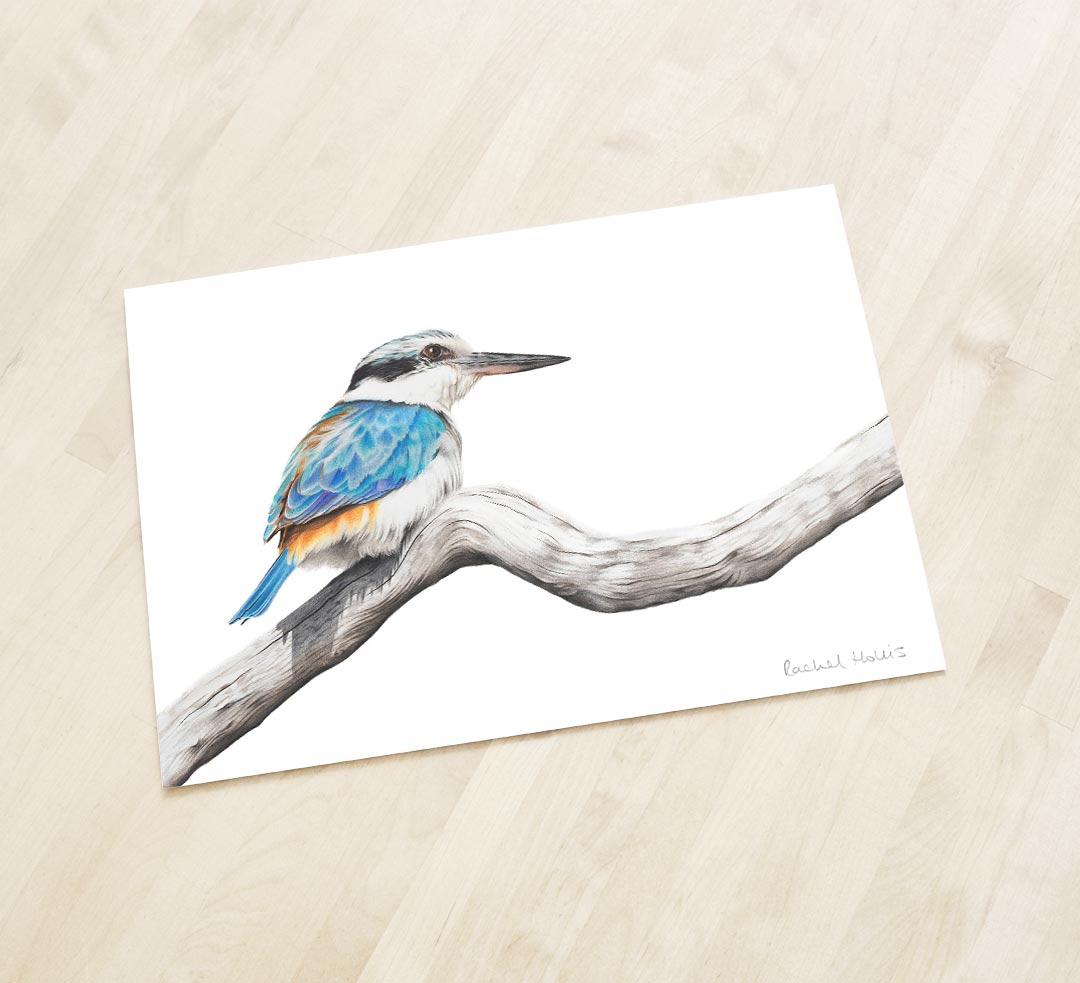 Red-backed Kingfisher - Fine Art Print