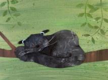 Palawan bearcat snoozing in a tree