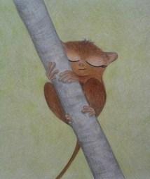 Sleepy Philippine tarsier