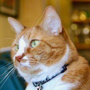 Schroedinger the quantum cat