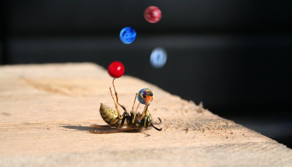 wasp lying on its back juggling tiny balls
