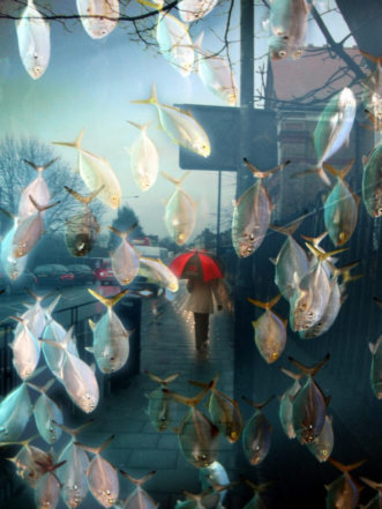 fish rain