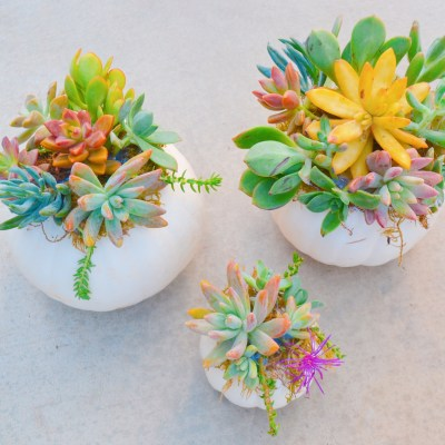 Pumpkin Succulent Kid-Friendly Craft Project