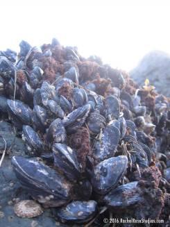 musselsandlight-1000x1300