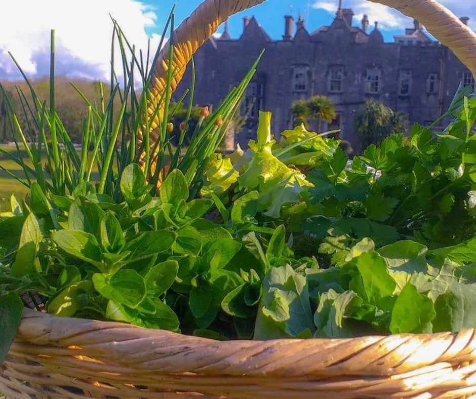A basket filled with organic greens in front of Belleek castle